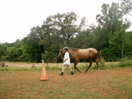 Lyncbhurg horseback riding lessons