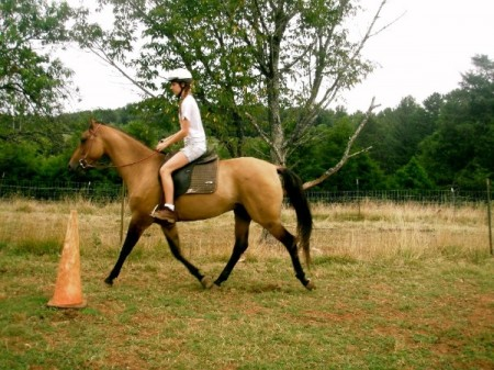 Roanoke horseback riding lessons