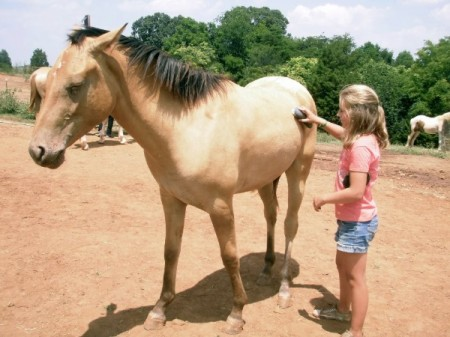 horseback riding lessons Roanoke