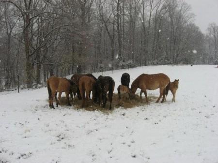 Bedford County horseback riding