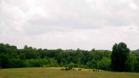 horseback riding lesson Smith Mountain Lake VA