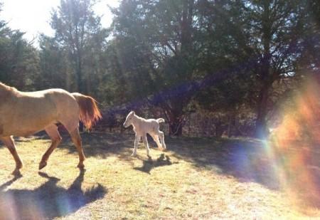 SML horseback riding