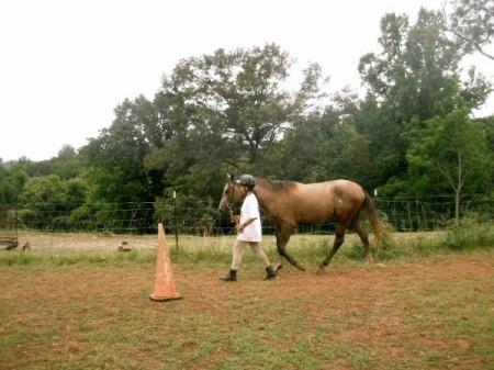 Lyncbhurg horseback riding lessons