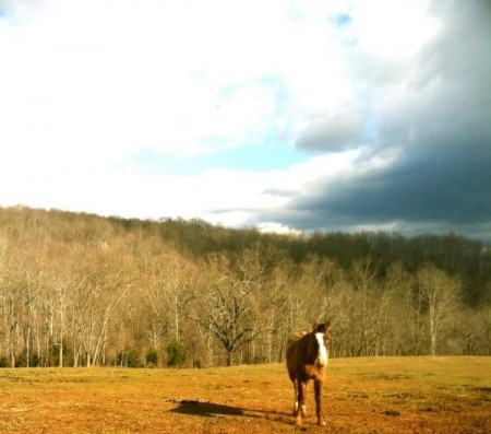 horseback riding Lynchburg