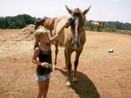 Moneta VA horseback riding