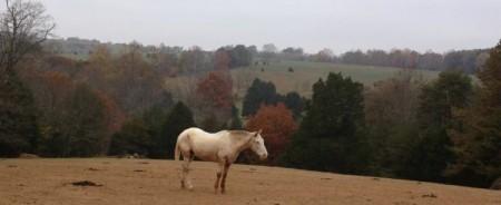 Smith Mountain Lake horseback riding